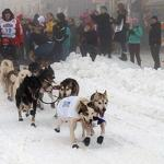 The 2013 Iditarod Trail Sled Dog Race Kicks Off in Downtown Anchorage