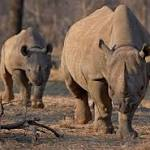 Black rhino hunt permit auctioned