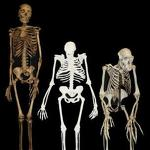 Fossils suggest possible new candidate for human ancestor