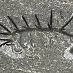 Freaky Burgess Shale fossil finds its head