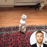 """Calvin Harris Has a """"Moment"""" With Taylor Swift's Cats, Parties With Her Posse of ..."""