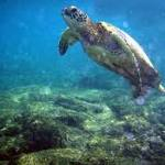 17K Marine Species Remain Unprotected