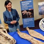 Disputed dinosaur formally returned to Mongolia