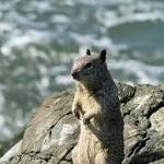 A Treasure Valley Ground Squirrel Tests Positive for Plague