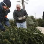 O, Christmas Tree: Real trees are the freshest, greenest way to go