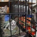 Surge In Abandoned Kittens Prompts Oakland Animal Shelter To Ask For Foster ...