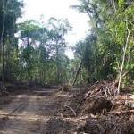 Half of all Amazonian tree species may be globally threatened