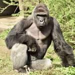 Barrier in Cincinnati Zoo's Harambe exhibit failed to meet standards, feds say