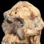 In Photos: 'Little Foot' Human Ancestor Walked With Lucy