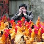 New Bird Flu Danger Worse Than Believed, Says Urgent Report