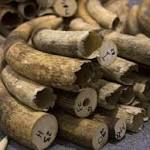 Hong Kong to burn stockpile of contraband ivory
