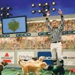 Local dogs have their play at 'Puppy Bowl XI'