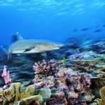Obama will propose vast expansion of Pacific Ocean marine sanctuary