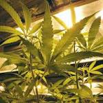 NJDOH Rejects Petition for Rulemaking on Medical Marijuana