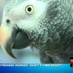 Talkative Parrot May Hold Major Clue to Murder