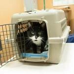 UVa Medical Center ends intubation training with live cats