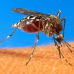 Infected bug lands county atop state risk list