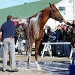 Dortmund owner was born with horse sense