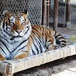 7th big cat dies at Texas animal refuge from virus