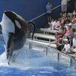 Lawmaker Attempting to Ban Killer Whales From California SeaWorld