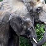 Pittsburgh zoo to review use of dogs to control elephants