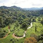 Lost city found untouched in deep Honduran jungle, explorers keep location ...