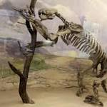 Sloths may be slow, but they evolved super fast
