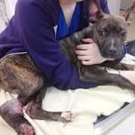 FBI turns animal cruelty into top-tier felony