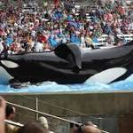 SeaWorld Fights Back at the Critical Documentary 'Blackfish'