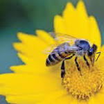 Labels to feature bee warnings