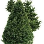 Christmas tree recycling encouraged