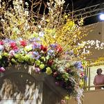 Flower Show opens with hopes of broadening appeal