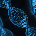Scientists propose creation of synthetic human genome