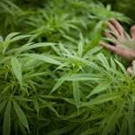 How Colleges Are Dealing With Legal Pot