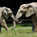 PETA criticizes zoo using dogs to herd elephants