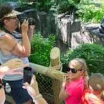Feds: Ohio zoo's barrier didn't meet standards day Harambe shot