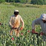Afghanistan opium production hits new high as foreign troops pack up
