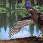 Oldest known avian relative of today's birds found in China