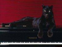 Panther Black