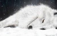 Киба Волчица