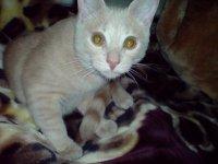 Simon The Cat