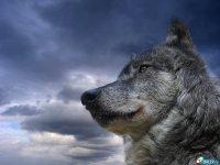Сергей Wolf