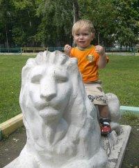 Лев Lion