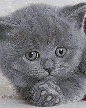 Natasha Cat