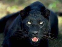 leo leoo